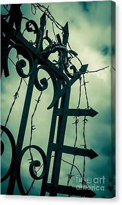 Barbed Wire Gate Canvas Print by Carlos Caetano