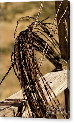 Barbed Wire Canvas Print by Robert Minkler