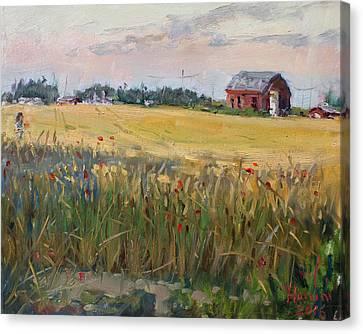 Barn In A Field Of Grain Canvas Print by Ylli Haruni