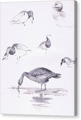 Barnacle And White Fronted Geese Canvas Print by Archibald Thorburn