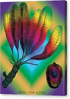Basia Plant Canvas Print by Eric Edelman