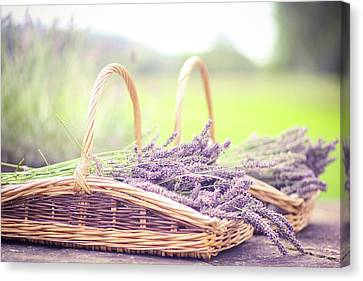 Baskets Of Lavender Canvas Print by Sasha Bell