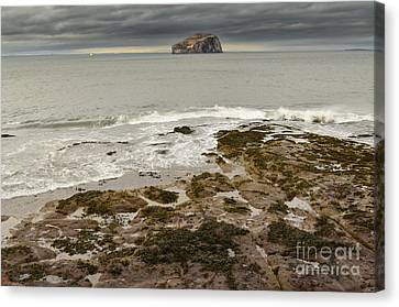 Bass Rock Canvas Print by Stephen Smith