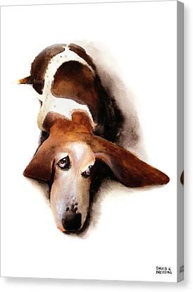Basset Hound I - Lulu Canvas Print by David Breeding