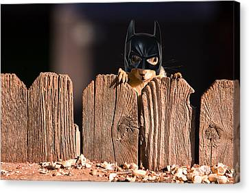 Bat Squirrel  The Cape Crusader Known For Putting Away Nuts.  Canvas Print by James BO  Insogna