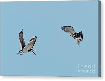 Battle In The Air Canvas Print by Tom Rostron