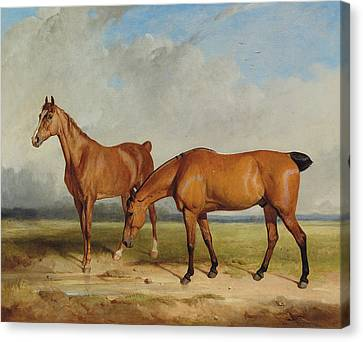 Bay Hunter And Chestnut Mare In A Field Canvas Print by Thomas Woodward