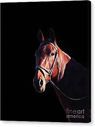 Bay On Black - Horse Art By Michelle Wrighton Canvas Print by Michelle Wrighton
