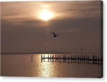 Bay Sunrise Canvas Print by Bill Cannon