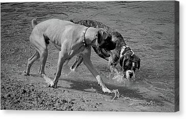 Beach Buddies Canvas Print by DigiArt Diaries by Vicky B Fuller