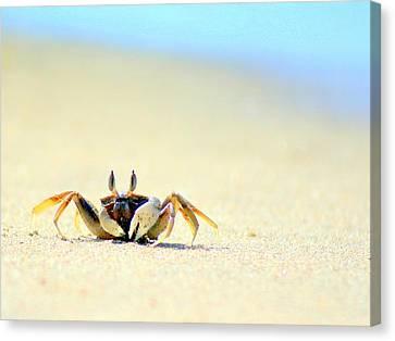 Beach Crab Canvas Print by A Rey
