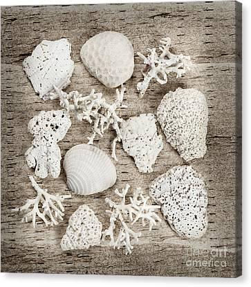 Beach Finds Canvas Print by Elena Elisseeva