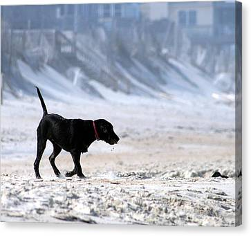 Beach Play Canvas Print by Christopher Hignite