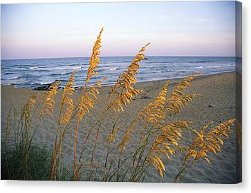 Beach Scene With Sea Oats Canvas Print by Steve Winter