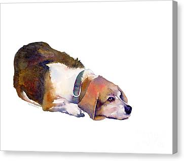 Beagle Thoughts Canvas Print by Amy Kirkpatrick