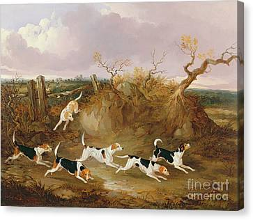 Beagles In Full Cry Canvas Print by John Dalby