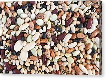 Beans Canvas Print by Tom Gowanlock