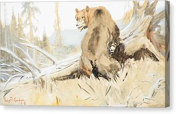 Bear  Canvas Print by Celestial Images