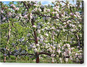 Beautiful Blossoms - Digital Art Canvas Print by Carol Groenen