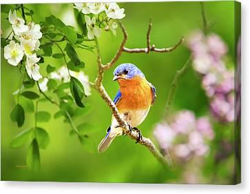 Beautiful Bluebird Canvas Print by Christina Rollo