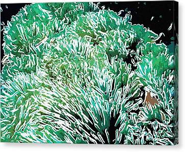 Beautiful Coral Reef 2 Canvas Print by Lanjee Chee