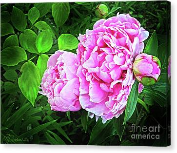 Beautiful Garden Peony Canvas Print by Patricia L Davidson