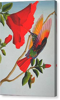 Beautiful Hummingbird Canvas Print by Brian Leverton