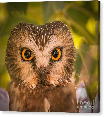 Beautiful Owl Eyes Canvas Print by Robert Bales