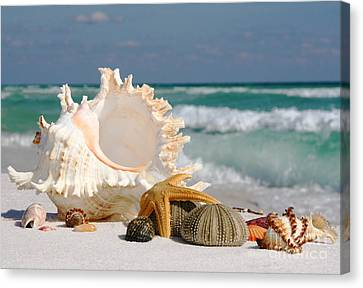 Beautiful Sea Shell On Sand Canvas Print by Boon Mee