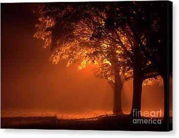 Beautiful Trees At Night With Orange Light Canvas Print by Simon Bratt Photography LRPS