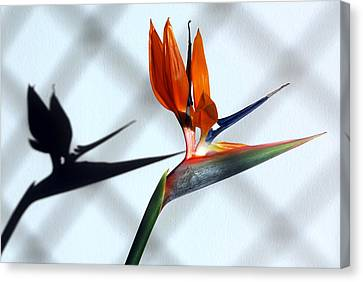 Beauty And The Shadow Canvas Print by Terence Davis