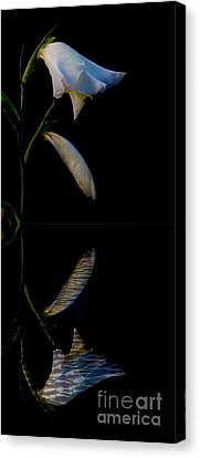 Beauty Mirrored Canvas Print by Al Bourassa
