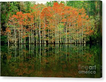 Beaver's Bend Cypress All In A Row Canvas Print by Tamyra Ayles