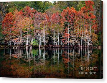 Beaver's Bend Cypress Soldiers Canvas Print by Tamyra Ayles