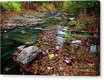 Beaver's Bend Tiny Stream Canvas Print by Tamyra Ayles