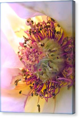 Bedazzled Canvas Print by Gwyn Newcombe