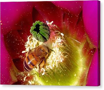 Bee At Work Canvas Print by Feva  Fotos