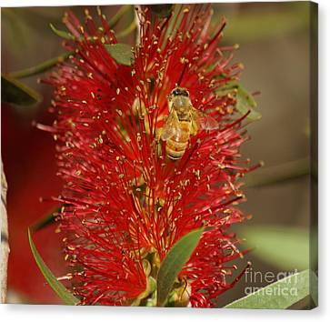 Bee Have Canvas Print by Merrin Jeff