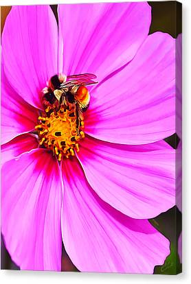 Bee On Pink Canvas Print by Bill Caldwell -        ABeautifulSky Photography