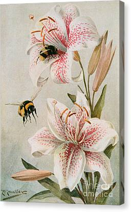 Bees And Lilies Canvas Print by Louis Fairfax Muckley
