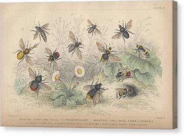 Bees Canvas Print by Oliver Goldsmith