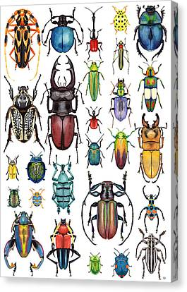 Beetle Collection Canvas Print by Kelly Jade King