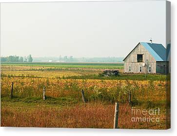 Before The Sweat Canvas Print by Aimelle