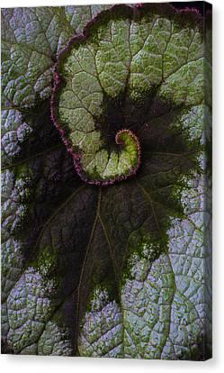 Begonia Leaf Close Up Canvas Print by Garry Gay