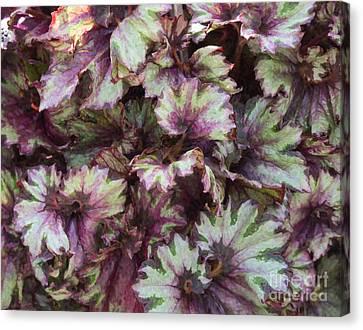 Begonia Raspberry Swirl Canvas Print by Tim Gainey