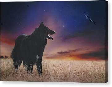 Belgian Shepherd Artwork14 Canvas Print by Wolf Shadow Photography