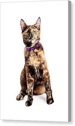 Bengal Kitty Cat Sitting Canvas Print by Susan  Schmitz