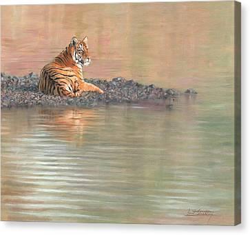Bengal Tiger Canvas Print by David Stribbling