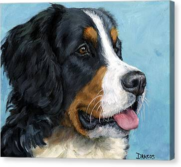 Bernese Mountain Dog On Blue Canvas Print by Dottie Dracos