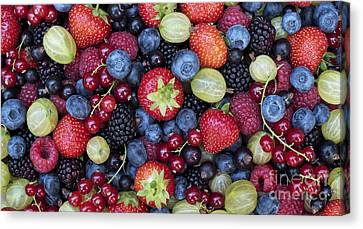 Berried  Canvas Print by Tim Gainey